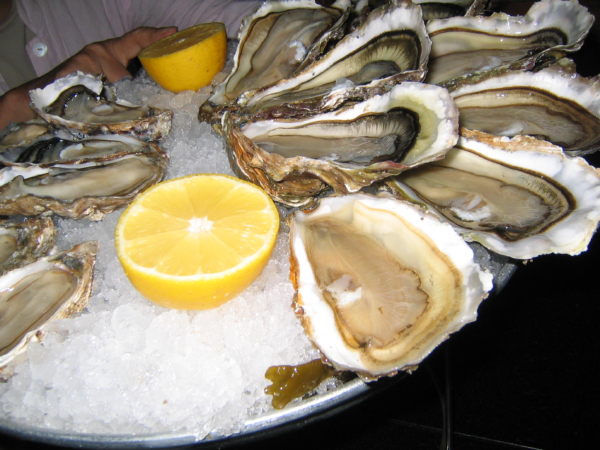oyster in Bordeaux