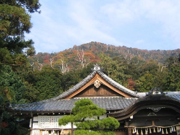 紅葉と枯れ木が美しい
